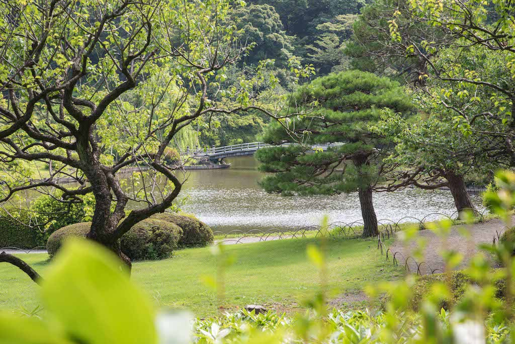 Shinjuku Gyoen - Top things to do in Shinjuku. Photography: https://www.instagram.com/rossharrison_tokyo/